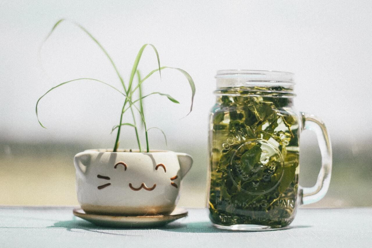 13 Habits to Help You Adopt a Zero Waste Lifestyle